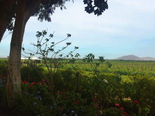 Tacama garden