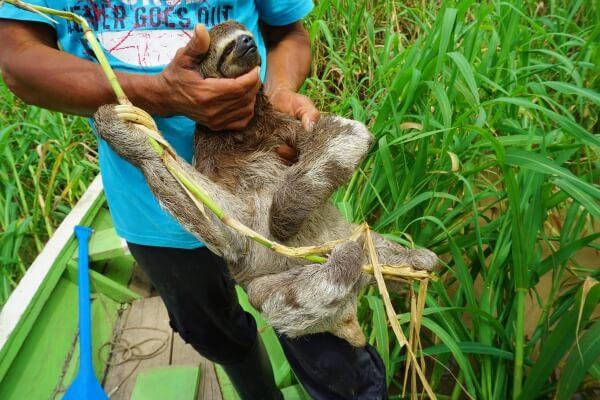 Sloth 7