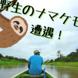 【ジャングル旅3】野生のナマケモノと遭遇!そして木登り