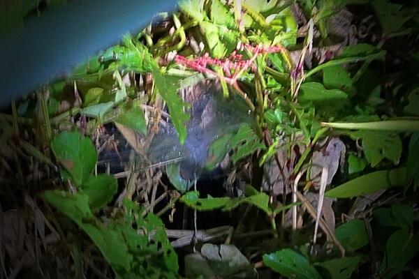 Taratula nest
